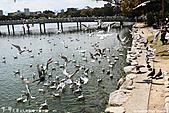 H22.九州福岡 大濠公園野鳥の森*:IMG_0824.jpg
