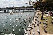H22.九州福岡 大濠公園野鳥の森*:IMG_0840.jpg