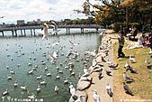 H22.九州福岡 大濠公園野鳥の森*:IMG_0841.jpg