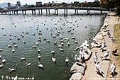 H22.九州福岡 大濠公園野鳥の森*:IMG_0848.jpg