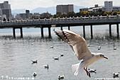 H22.九州福岡 大濠公園野鳥の森*:IMG_0879.jpg