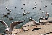 H22.九州福岡 大濠公園野鳥の森*:IMG_0881.jpg