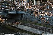 H22.島根松江 早咲きの桜が開花する早春の玉造溫泉を訪ね:IMG_7394.jpg