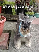 狗子搞笑事件簿:280006