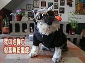 狗子搞笑事件簿:P4110044