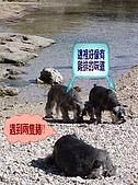 狗子搞笑事件簿:020004