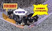 狗子搞笑事件簿:020013