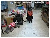 我的家庭獸醫師王舒德:IMG_8527.JPG