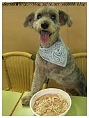與狗共餐樂融融:可以站在桌上吃嗎?Rose說當然可以呀
