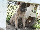 小小流浪犬:P1260877.JPG