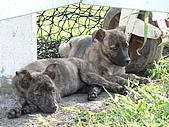小小流浪犬:P1260885.JPG