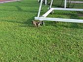 小小流浪犬:P1260856.JPG