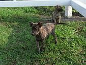 小小流浪犬:P1260861.JPG