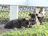小小流浪犬:P1260866.JPG