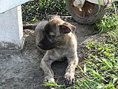 小小流浪犬:P1260867.JPG