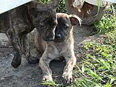 小小流浪犬:P1260868.JPG