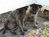 小小流浪犬:P1260870.JPG
