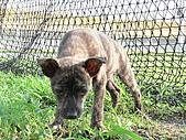 小小流浪犬:P1260872.JPG