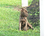 小小流浪犬:P1260875.JPG