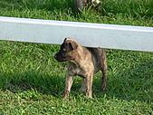 小小流浪犬:P1260855.JPG