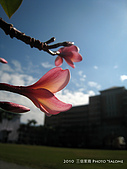 2010 *三信隨拍:SanSin_11.jpg