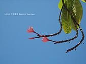 2010 *三信隨拍:SanSin_14.jpg