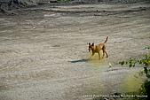 2010-04-13 林邊河堤:SW0413_b06.jpg