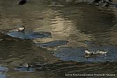 2010-04-13 林邊溪出海口:SW0413_c04.jpg