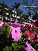 2010 *三信隨拍:SanSin_03.jpg