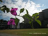 2010 *三信隨拍:SanSin_06.jpg