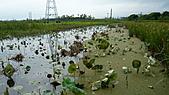 2010-09-17花蓮:P1020551.JPG