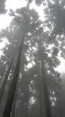 2009-11-21~22竹東山上人家民宿:P1010306.JPG