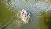 2012-03-06 淡水:P1030394.JPG