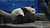 動物園+慶成街一號-私房泰:動物園-熊貓館.JPG