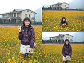 美濃花海2008.02.24:DSCF0705.JPG