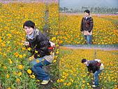 美濃花海2008.02.24:DSCF0706.JPG