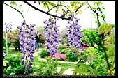 紫藤咖啡園:DSC_9576.JPG