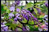 紫藤咖啡園:DSC_9581.JPG