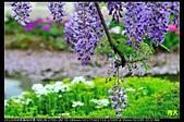紫藤咖啡園:DSC_9587.JPG