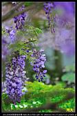 紫藤咖啡園:DSC_9589.JPG