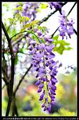 紫藤咖啡園:DSC_9654.JPG