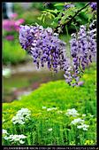 紫藤咖啡園:DSC_9594.JPG
