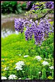 紫藤咖啡園:DSC_9600.JPG