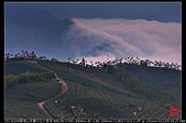 碧湖山茶園日出大雲海:DSC_6191.jpg