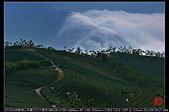 碧湖山茶園日出大雲海:DSC_6200.jpg