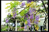 紫藤咖啡園:DSC_9562.JPG