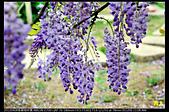 紫藤咖啡園:DSC_9659.JPG