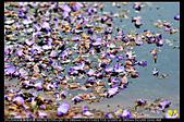 紫藤咖啡園:DSC_9604.JPG