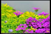 紫藤咖啡園:DSC_9605.JPG