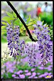 紫藤咖啡園:DSC_9661.JPG